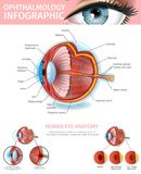 Cross Section of Human Eye Medical Aid Banner. Human Eye Anatomy, Ophthalmology Infographic with Outside and Inner View of Vision Organ. Cross Section. Pressure royalty free illustration