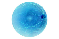 Human eye anatomy, retina Stock Images