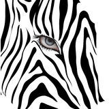 Human eye among black lines.Vector illustration Stock Photography