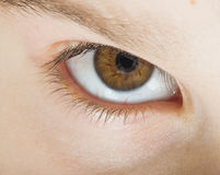 Human eye brown color Royalty Free Stock Images