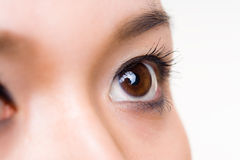 Human eye close up Stock Image