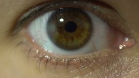 Human eye close up looking to camera macro view detailed anatomy. Lashes stock footage
