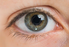 Human eye close up Royalty Free Stock Photography