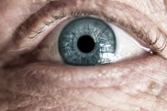 Human Eye Closeup Photography Royalty Free Stock Image