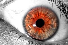 Human eye expressing surprise and fear macro  close-up background Stock Photos