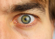 Human eye and eyebrow close-up. Concentrated look Stock Photography