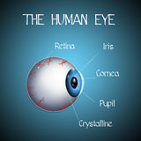 The human eye Stock Images