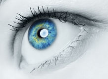 Human Eye. Image of human eye, blue and green iris Stock Image