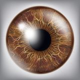 Human Eye Iris Vector. 3D Realistic Eyeball Illustration. Eye Iris Realistic Vector. Anatomy Concept Illustration Stock Image