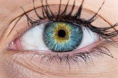 Human eye macro. Macro phottography of woman bule and amber eye Royalty Free Stock Photos