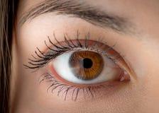 Human eye. Macro. Stock Photography