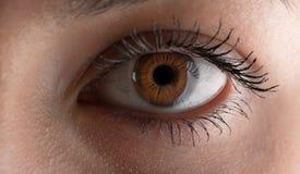 Human eye. Macro. Stock Images