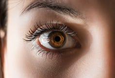 Human eye. Macro. Stock Photo