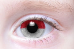 Human eye with national flag of indonesia. Human`s eye with national flag of indonesia royalty free stock images