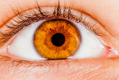 Human eye. Photo Human eye close-up royalty free stock photo