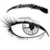 Human eye sketch Stock Photography