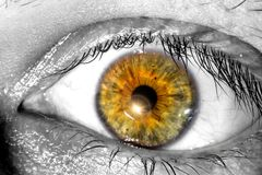 Human eye with a sunlight near the pupil macro   texture background Stock Photography