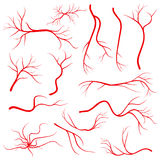 Human eye veins, vessel, blood arteries isolated on white vector set Royalty Free Stock Photography