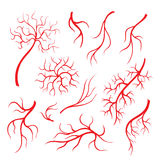 Human eye veins or vessel, red capillaries, blood arteries isolated set.  Royalty Free Stock Photos