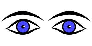 Human eyes. Vector of human eyes and eyebrows Stock Photography