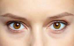 Human eyes Stock Images