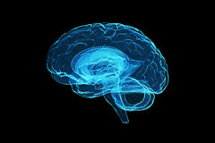 human för hjärna 3d Fotografering för Bildbyråer