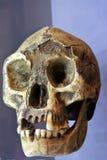Human facial skeleton front view. An old human facial skeleton bones front view background face stock photography