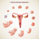 Human Fertilization Process Poster vector illustration
