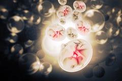 Human fetus. Digital illustration of Human fetus Royalty Free Stock Images