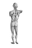 Human figure drawing from behind Royalty Free Stock Image