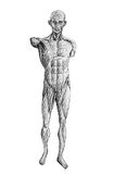 Human figure drawing front by pencil. Isolated on white Royalty Free Stock Photo