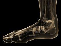 Human foot Stock Photo