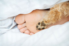 Human foot and dog paw together on bed. Morning Royalty Free Stock Photography