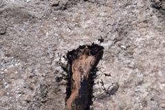 Human foot in the mud and salt lake brine Stock Photo