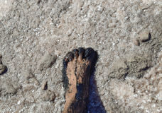 Human foot in the mud and salt lake brine Royalty Free Stock Photos