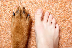 Human foot and paw. Royalty Free Stock Images