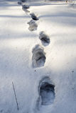 Human footprint. In the deep multi-layer snow Royalty Free Stock Photos