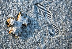 Human footprint and the leaf in the snow Royalty Free Stock Images