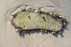 Human footprint in the tropical shells at Chaweng beach at Koh S Stock Photos