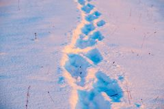 Footprint in winter snow. Human footprint in winter heavy snow at sunset royalty free stock image
