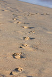 Human footprints Royalty Free Stock Photos
