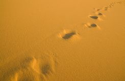 Human footprints on the beach Stock Photos