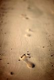 Human footprints on the beach sand Royalty Free Stock Photo