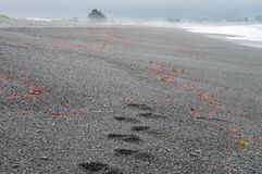 Human footprints on the beach Stock Photo