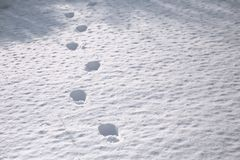 Free Human Footprints In Deep Snow. Not Cleaned Track. Bad Snow Removal. Off-road. Way Home Royalty Free Stock Images - 133166829