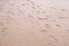 Human footprints on the sand Stock Photo