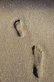 Human footprints in the sand Royalty Free Stock Photo