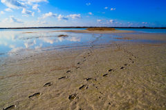 Human footprints in the sand leading to the lake. Footprints in the sand, leading to the lake. Sunny spring day. Blue sky with clouds royalty free stock images