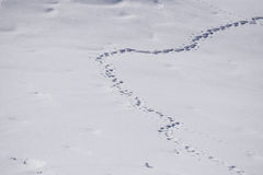 Human footprints in snow Stock Images
