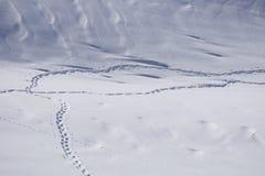 Human footprints in snow Stock Photos